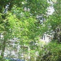 香山植物园宿舍