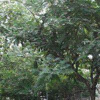 紫竹院路小区